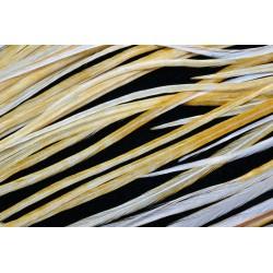 selle de coq phenix medium ginger