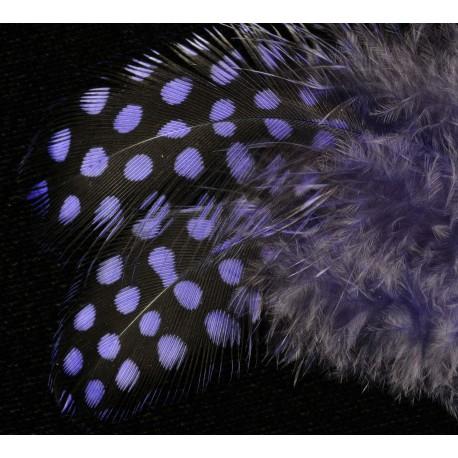 plumes de pintades gros pois