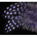 plumes de pintades gros pois teintées