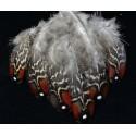 plumes de dos de tragopan satyre