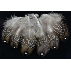 plumes de couverture d'aile de tragopan satyre
