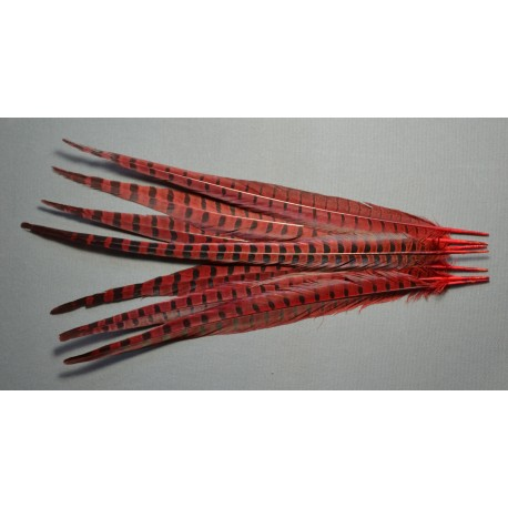 plume de queue de faisans de colchide