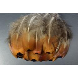 plume de flanc de faisans de colchide