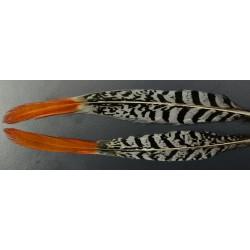 plume de queue de faisan lady amherst pointe orange 25-30 cm