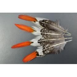 plume de queue de faisan lady amherst pointe orange 10-15 cm
