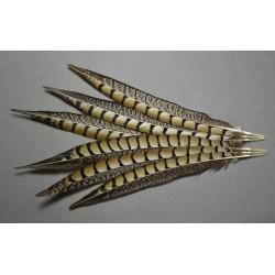 1 plume de queue de faisan lady amherst beige naturel 23-28 cm