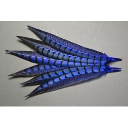 1 plume de queue de faisan lady amherst teintée turquoise 23-28 cm