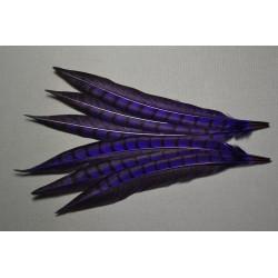 1 plume de queue de faisan lady amherst teintée pourpre  23-28 cm
