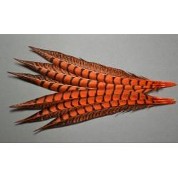 1 plume de queue de faisan lady amherst teintée orange  23-28 cm