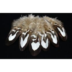 couverture d'aile de faisan venéré naturel 7-9 cm