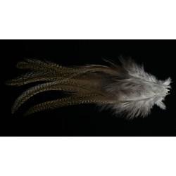 4 plumes de selle de coq de léon medium pardo