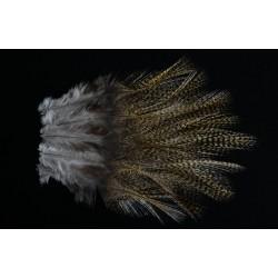 12 plumes de selle de coq de léon medium pardo