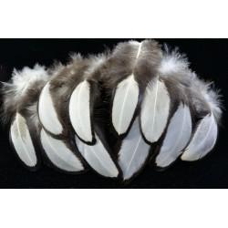 plumes de poule sébright argentées 5-8 cm