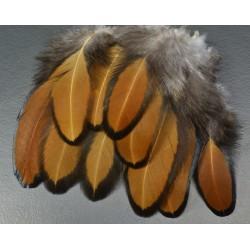 plumes de poule sébright doées 5-8 cm