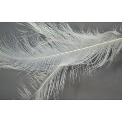 plume d'aile de nandou blanc 50-60 cm