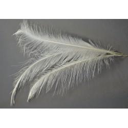 plume d'aile de nandou blanc 40-50 cm