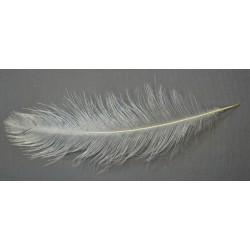 plume d'aile de nandou blanc 35-40 cm