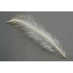 plume d'aile de nandou blanc 25 à 35 cm