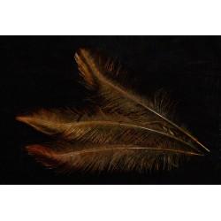 plume d'aile de nandou teintées olive 35-45 cm