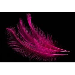 plume d'aile de nandou teintée fuchsia 35-45 cm