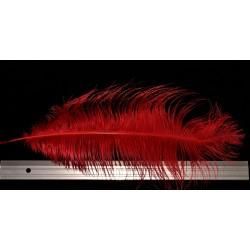 plume d'aile d'autruche teintées rouge 55 cm