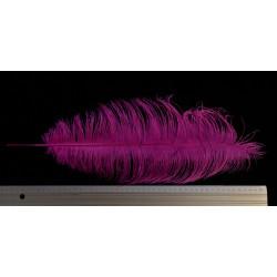 plume d'aile d'autruche teintées fuchsia 55 cm