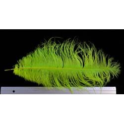 plume d'aile d'autruche teintées chartreuse 55 cm